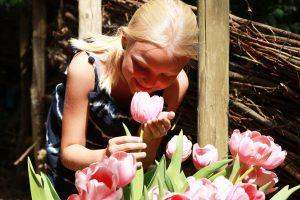 tulpenveld zien